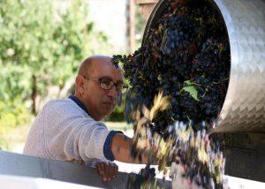 winemaker at work at the vineyard of Tenuta Vitalonga winery