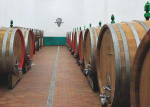 Terre Di Serrapetrona winery cellar with giant barrels full of wine