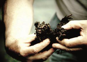 espenhof winemaker holds in his hands kompost for fertilizing soil