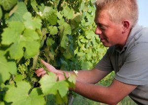Etienne Simonis - taking care of vines