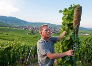 Etienne Simonis - boy in the vineyard