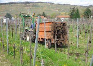 Etienne Simonis - Tractor in vineyard