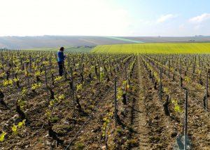 Vineyards under the blue sky at Vignoble Angst in Burgundy