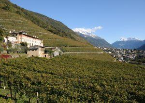 casa vinicola triacca lush and beautiful vineyard against estate