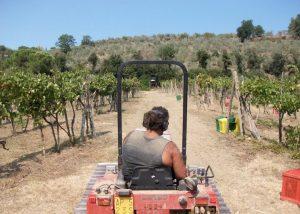 winemaker at Tenuta Montiani driving tractor at vineyard