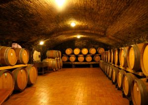 modern wine cellar full of barrels for wine aging in the perazzeta winery.