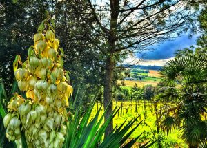 fattoria paradiso beautiful and lush gardens near winery in italy