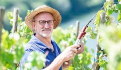 franz-josef eifel winemaker cares after grapes on vineyard near winery