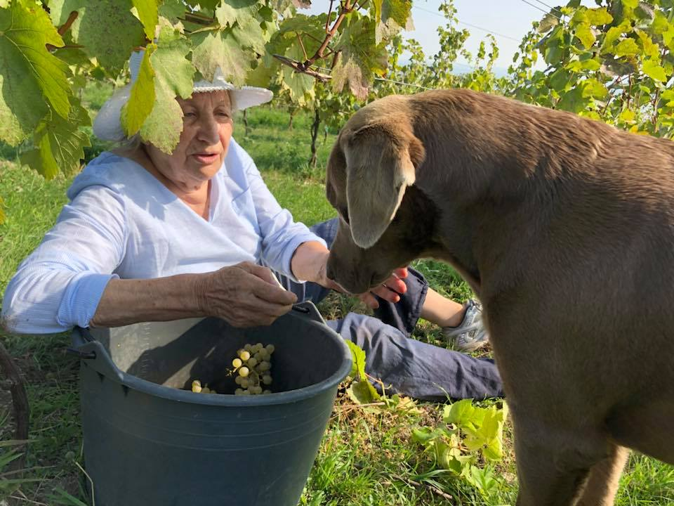 gregor schup winemaker and dog during harvest process in the vineyard