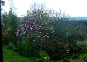 grey sands vineyard lush flowers and trees near amazing winery