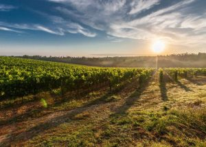 Champagne J. de Telmont - Beautiful vineyard landscape