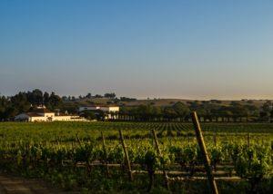herdade da calada slender rows of vines on vineyard near winery