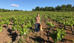 hija de anibal slender rows of grapevines on vineyard near winery