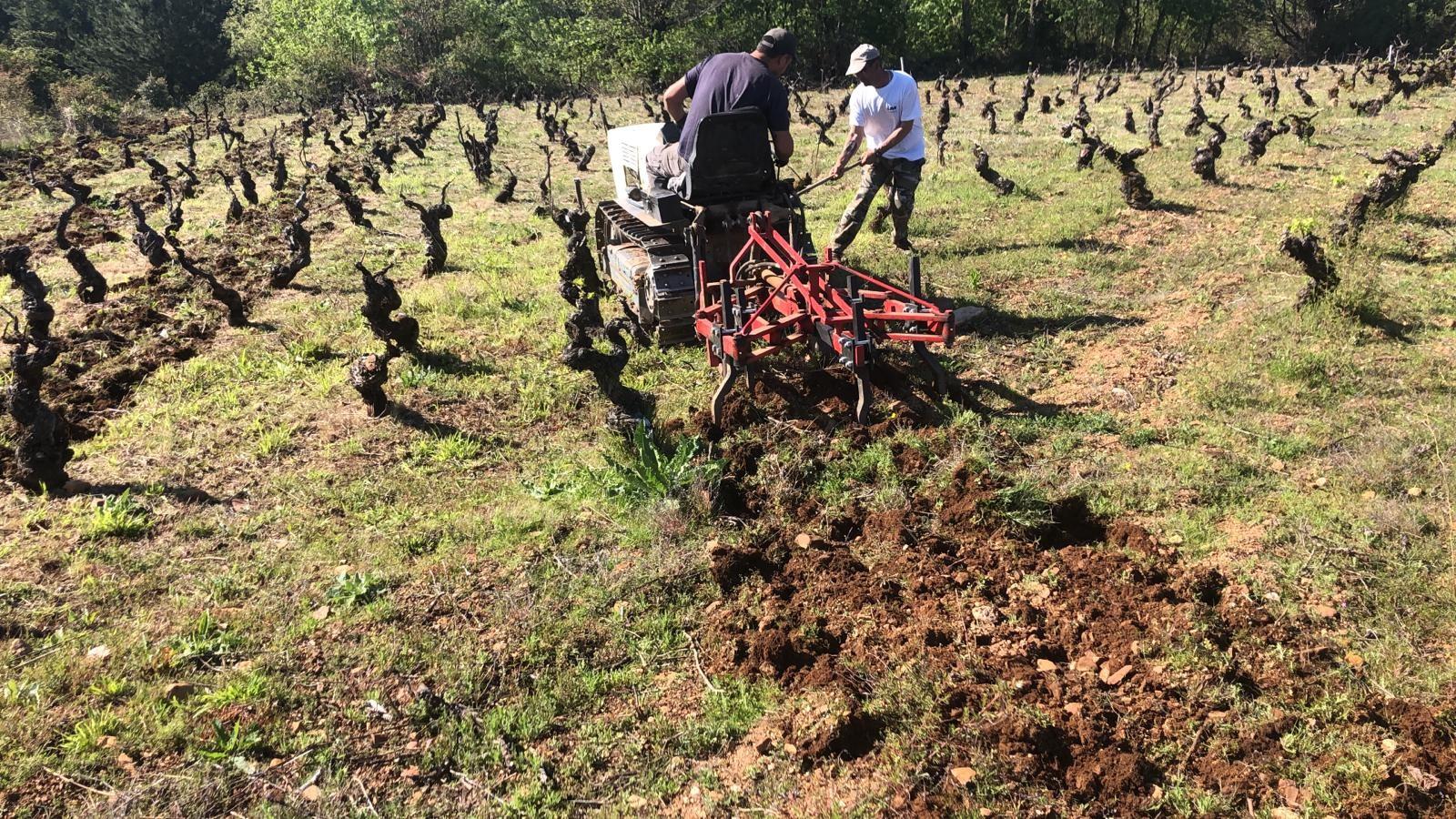 hija de anibal winemakers fertilyzing ground on vineyard near winery