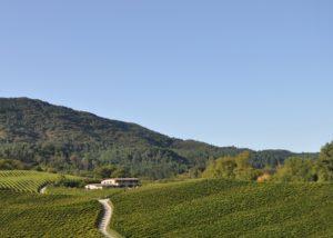 hiruzta bodega top view of the lush vineyards and estate in spain