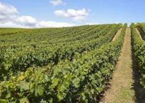 Jules Gautret Bordeaux