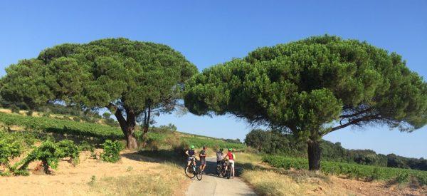 Visit of the vineyard with a blue sky at Domaine de la Mordorée