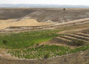 kirios de adrada top view of the lush vineyards near winery in spain