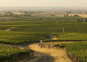 L'Ecole No 41 vineyards valley landscape