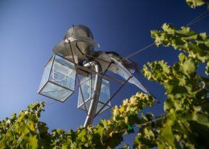 Mas Blanch I José - Blue Sky in Vineyards
