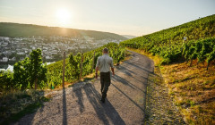 müller-burggraef winemaker stroll through lush vineyards near winery