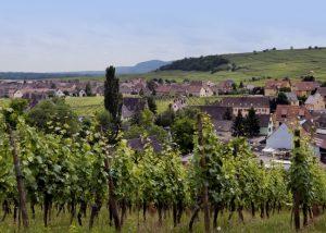 The vineyard at Domaine Bott-Geyl