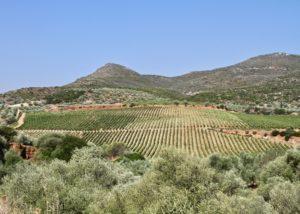 monemvasia winery top view of the lush vineyards near winery
