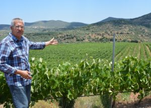 monemvasia winery winemaker near lush vineyards near winery in greece