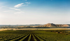 ochoa winery lush and amazing vineyards near winery in spain