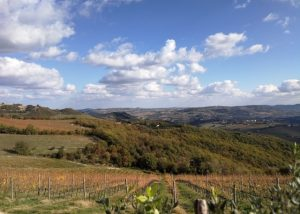 Terre Di Serrapetrona panoramic view of vineyard located in Italy