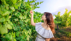 pazo pondal winemaker insecting grapevine on vineyard near winery in spain