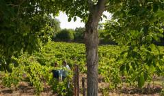 Tenuta Monte Gorna winemakers walking around vineyard in Italy