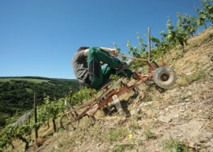 philipps-mühle winemaker working on vineyard near winery in germany