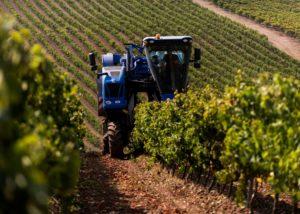 quinta da almiara amazing and lush vineyards near winery in portugal