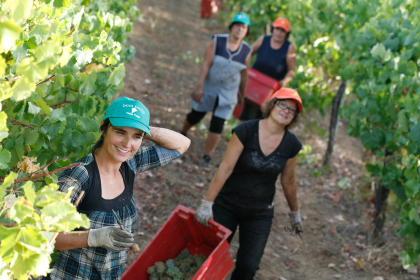 quinta da raza winemakers harvesting grapes on vineyard near winery
