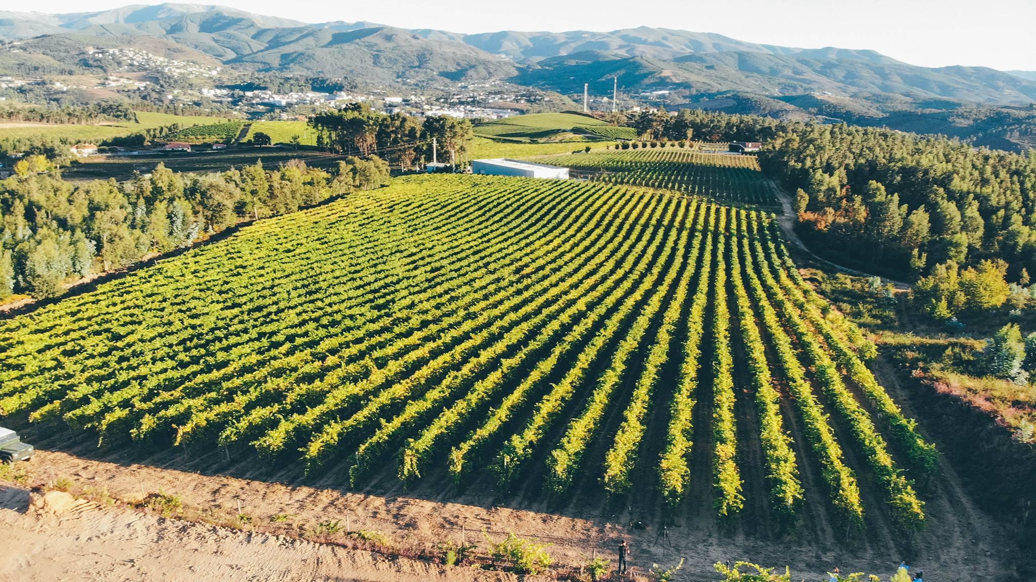 quinta da raza lush vineyard near winery in lovely portugal