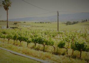 quinta do zambujeiro lush and amazing vineyards near winery in portugal