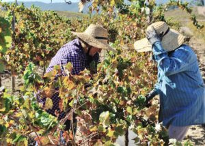 quinta do zambujeiro two winemakers working on vineyard near winery