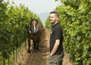 bergdolt-reif & nett winemaker and horse amid lush vineyard near winery