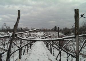 renčel wines snowy vineyard near slovenian estate in winter
