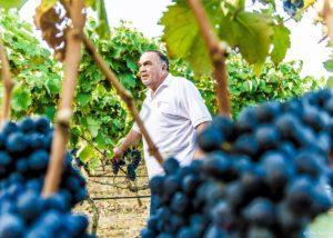 Romaldo Greco winery owner walking through vineyard reviewing grapes