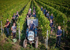 sektgut wilhelmshof team of winemakers on the vineyard near winery in germany
