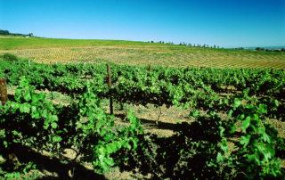 Saxenburg Estates - Vineyards