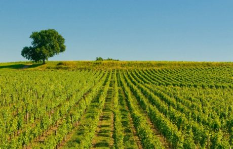 South West France wine region