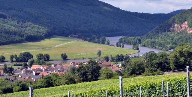 staatlicher hofkeller amazing and lush vineyard near winery