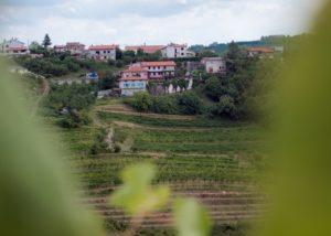 stekar wines amazing and lush vineyards near winery in slovenia
