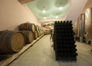 stekar wines winemaker holding in hands bunch of black grapes