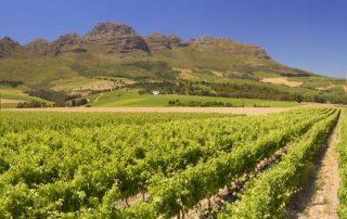Successful wine tourism business