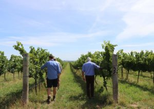 tamburlaine-wines-vineyard