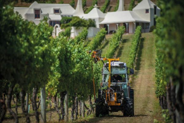 te mata estate winery grape harvesting process on vineyards near winery